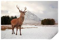 Deer Stag, Print