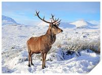 Deer Stag in snow, Print