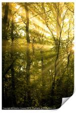 Sunrays Through the Trees, Print