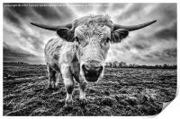 Cadzow White Cow Female, Print