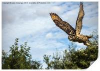 Turkmanian Eagle Owl, Print