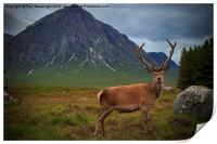 Monarch of the Glen at the Buachaille , Print