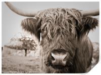 highland cow, Print