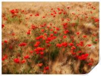 red poppy field, Print