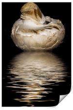 Mushroom, Print