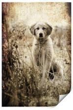 grunge puppy on a chain, Print