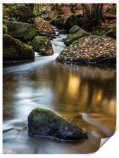 Autumn on Wyming Brook III, Print