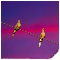 Birds on a Wire, Print