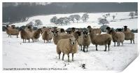 Ewe it's cold out here, Print