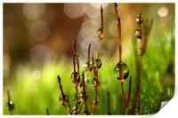 Moss Sparkles, Print