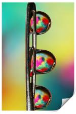 Needle with Tropical Droplets, Print