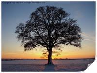 Oak Tree, Print