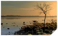 Morning at the Lake, Print
