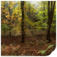 Autumn Highlights, Print