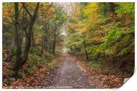 Autumn Cycle Path, Print
