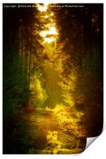 Enchanted Forest, Print