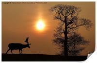 Fallow Deer, Print