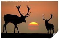 Sunset Stags, Print