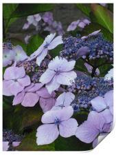 Sweet Purple Paradise!, Print