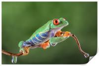 Red Eye Tree frog, Print