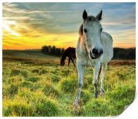 Pony Sunrise, Print