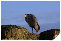 Heron on Guard Stornoway, Print