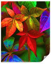 Vibrant multi coloured leaves, Print