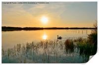 Swan at Sunset, Print