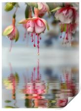 floral refections, Print