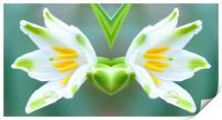 mirrored flower, Print
