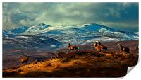 Stags at Strathglass, Print