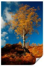 Autumn Gold, Print