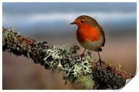 Robin, Print