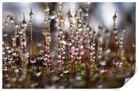 Mossy Diamonds, Print