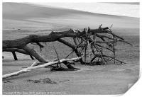Beached Tree, Print