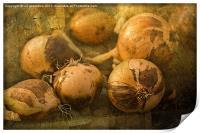 Onions, Print