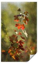 Autumnal Currant, Print