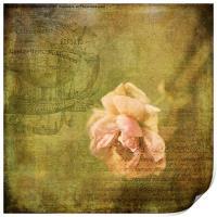 Yesterday's Rose, Print