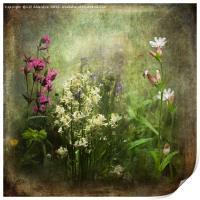 Wildflower Symphony, Print