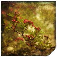Pink Hawthorn in Flower, Print