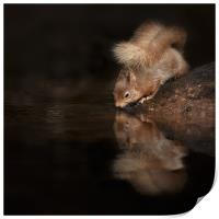 Red Squirrel Reflection, Print