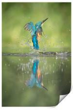 Male Kingfisher, Print