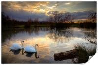 Swans at Sunset, Print