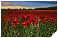Field of Remembrance, Print