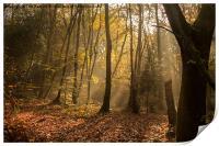 Autumn Mist, Print