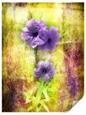 Flowering Mexican Petunias 2, Print