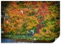 Rookery in Autumn, Print