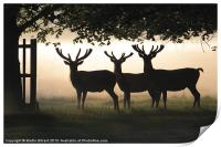 Stags In Silhouette, Print