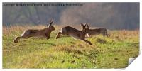 March Hare's, Print
