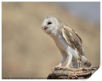 Barn Owl with Prey, Print